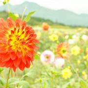 ooshika29-0004-2-1024x678